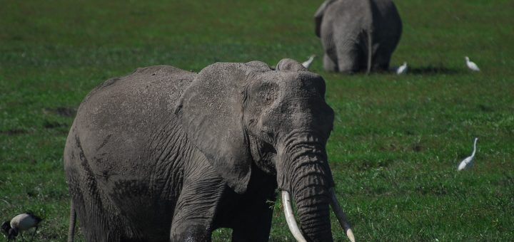The Elephant and the Ecosytem