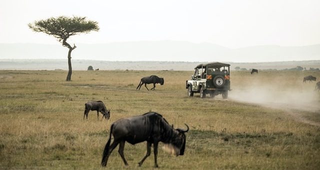 Planning an African Safari
