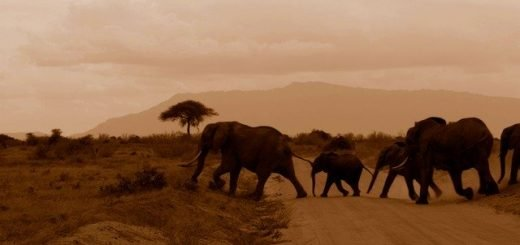 What to pack for a road trip in Kenya