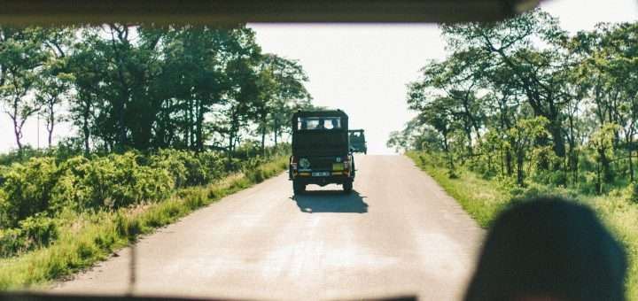Vitual Safaris in Africa
