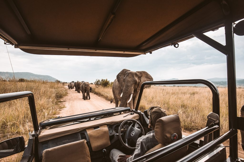 Virtual Safaris in Africa